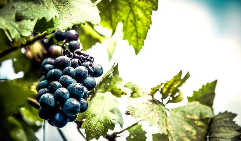 Valdas Mackela. Gražiausioji Saliamono giesmė: Mylimosios vynuogynai ir tikrosios ganyklos