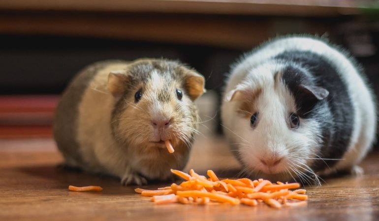Mityba karantino metu: kaip susitaikyti su maistu, kai jis nuolat šalia?